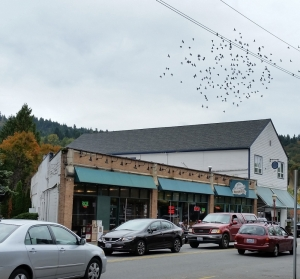 issaquah brewhouse